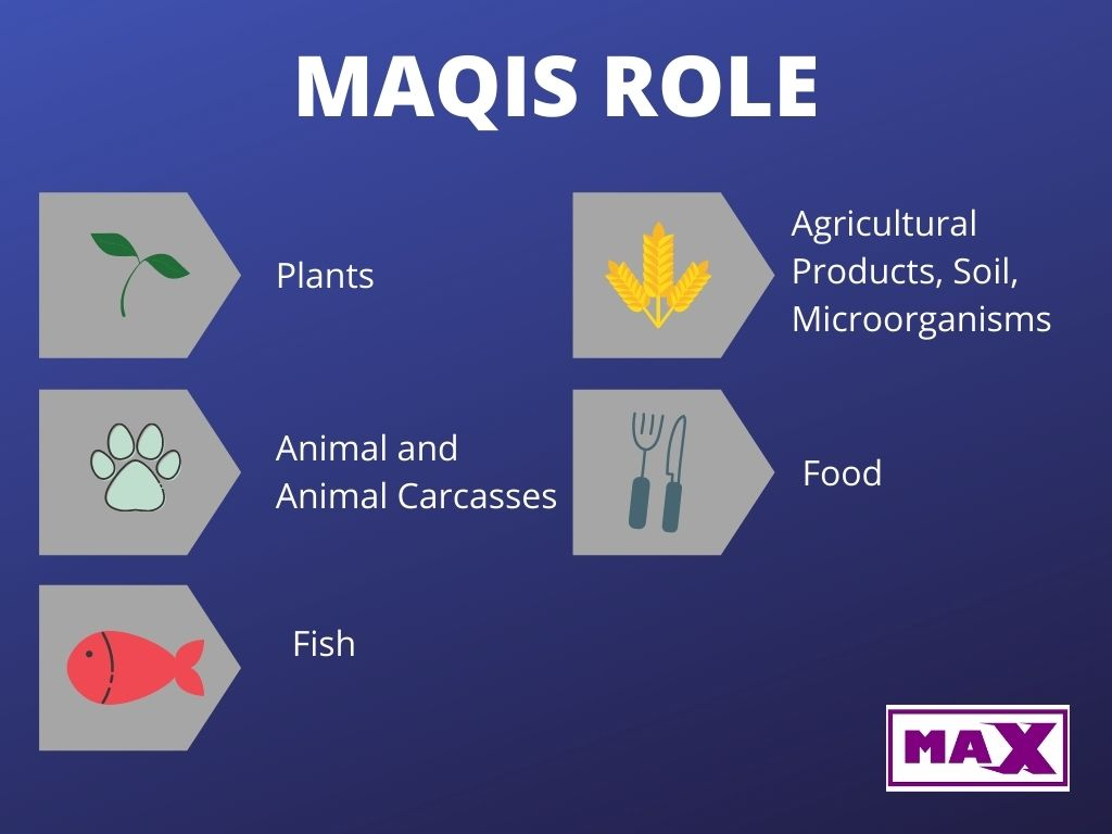What is MAQIS For